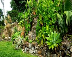 safari_gardens_projects_rainforest_wall_garden
