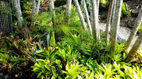 bromeliad_garden_path_1