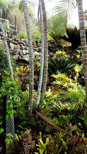 bromeliad_garden_path_2