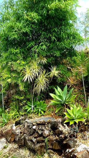 rainforest_wall_garden_bamboo
