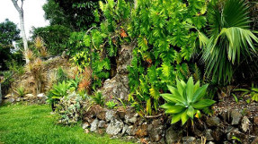 rainforest_wall_garden_middle