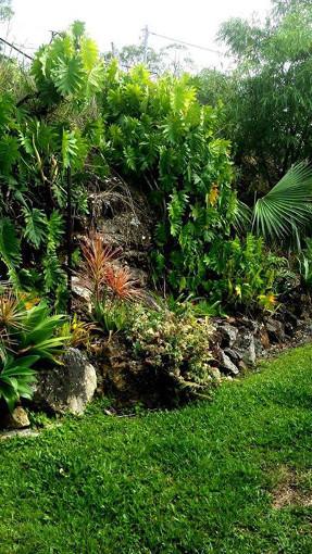 rainforest_wall_garden_side